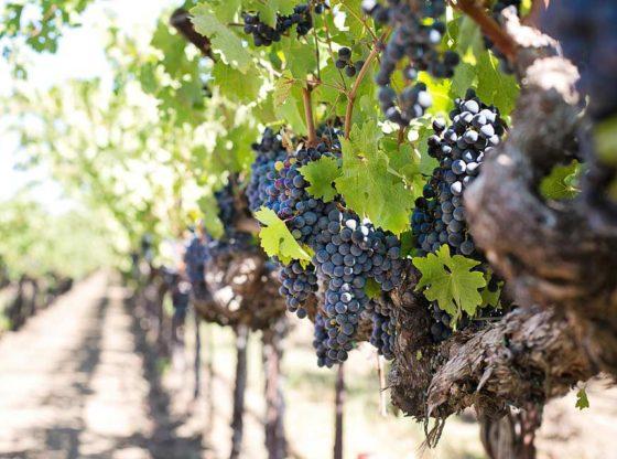 vignobles proches de Toulouse