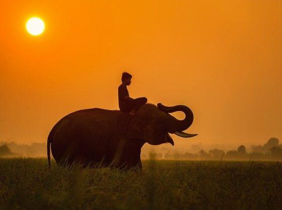 Voyage au cambodge et éléphants