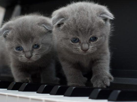 photo duo de chats